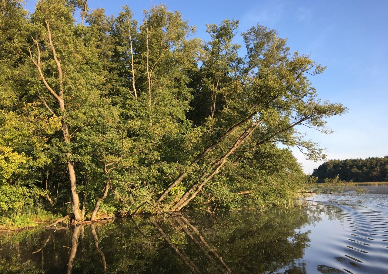 Bootsfahrt entlang des Müritz-Nationalparkes